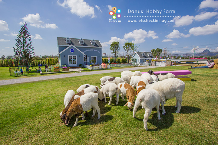 danus hobby farm_007