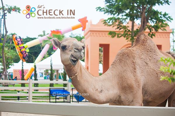 """ที่เที่ยว Theme Park แห่งใหม่ของชะอำ """"Camel Republic"""""""