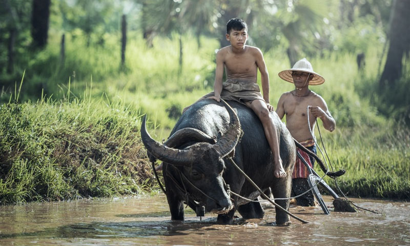 The Best practices of Agriculture in Asia
